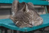 Cute Gray Cat Sitting On A Wooden Bench Outdoors .a Gray Cat Sits On A Wooden Bench Near The House. poster