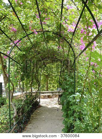 Jardim Arbor