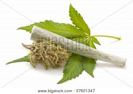 Cáñamo (cannabis)