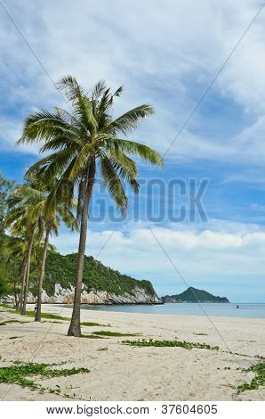 Tropical Sandy Beach