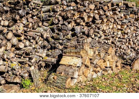 Wood In Pile Outdoor