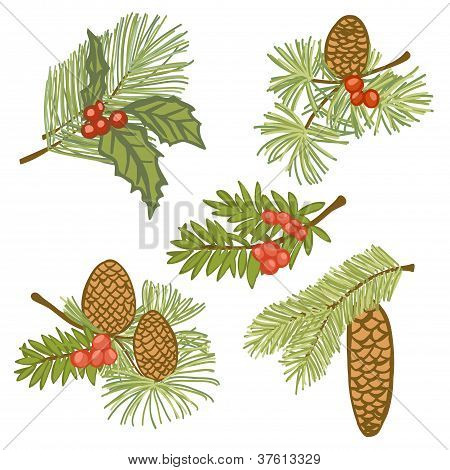Illustration Of Evergreen Branches With Cones And Berries