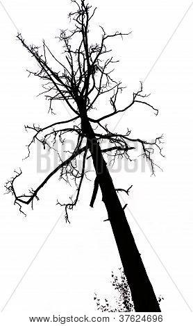 lebenden und toten Bäumen