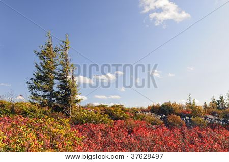 Wilderness Area in Fall