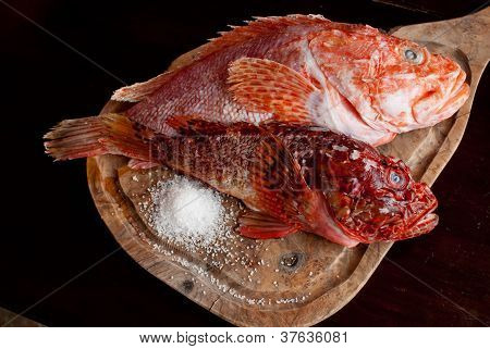 Scorpionfish On A Chopping Wood