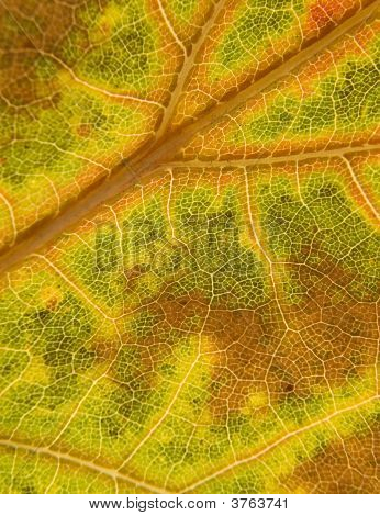 Macro Leaf
