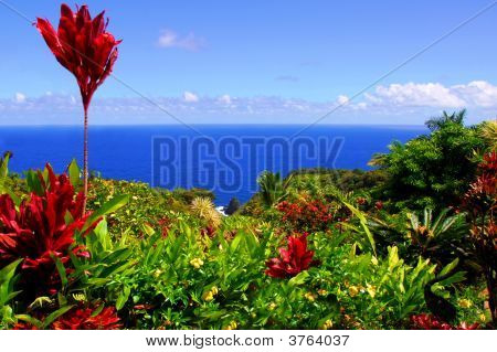 Garden Of Eden, Maui Hawaii