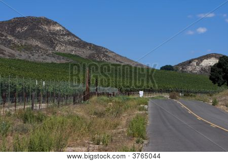 road through Vineyards In Santa Ynez