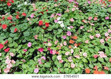 Colorful Plants In The Garden