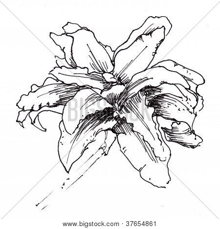 Hand drawn black and white flower