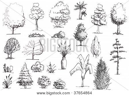 Hand drawn trees and shrubs black and white elevation