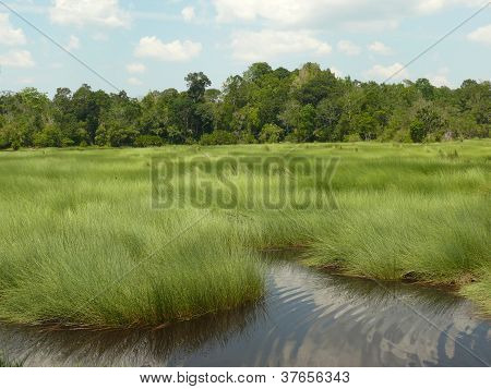 Silver and green marsh with forest in the background