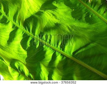 Sunlight through a yellow and green leaf