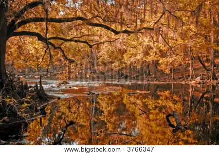 Red Autumn River