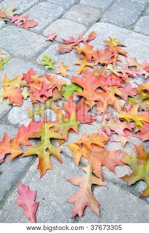 Fallen Oak Leaves On Paver Brick Patio
