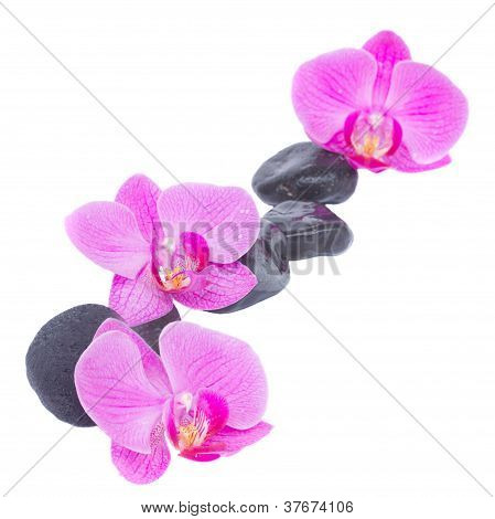 border of orchid and zen stones