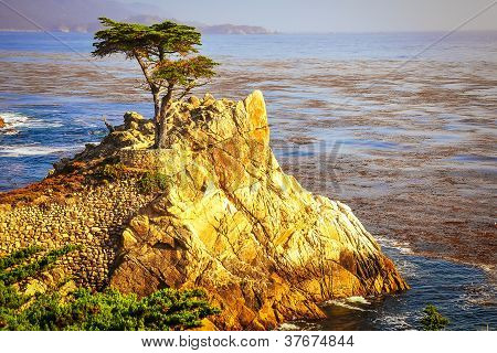Lone Cypress Tree On The Rock Cliffs Above Ocean