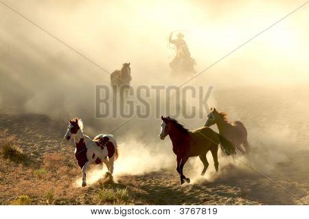 Sunlight Horses And Cowboy