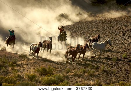 Cowboy And Cowgirl Roping And Riding