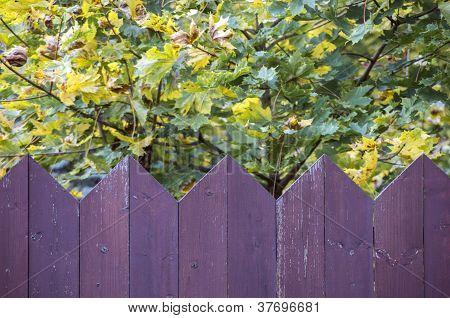 Purple Wooden Fence