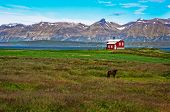 foto of iceland farm  - Iceland red house in the meadow with a horse mountain background Iceland - JPG