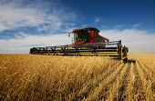 pic of combine  - modern combine harvester working on a wheat crop - JPG