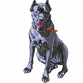Vector Sketch Black Cane Corso Smiling, Italian Breed Of Dog