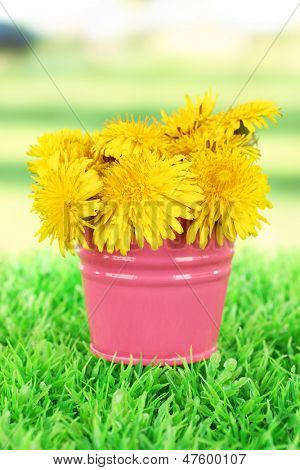 Dandelion flowers in bucket on grass on bright background