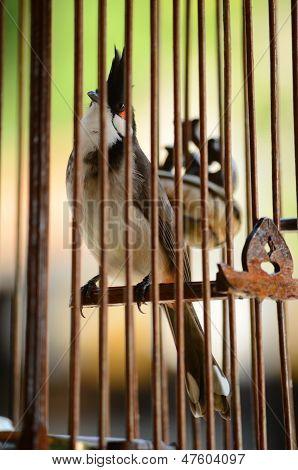 Un pájaro grifo