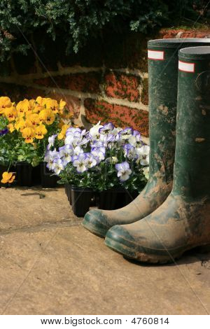 Boots And Pansies
