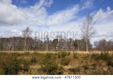Birch Tree Heathland