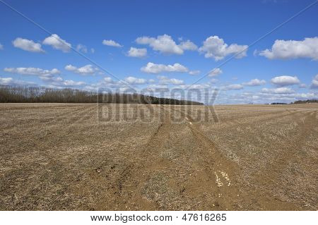 Empty Springtime Field