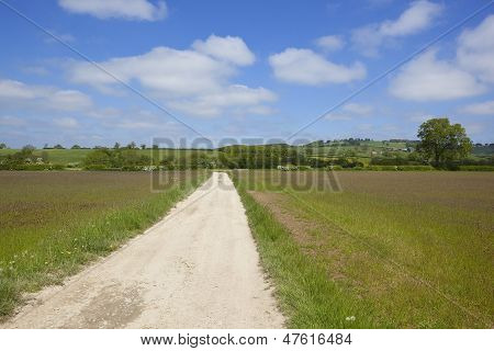 Country Footpath