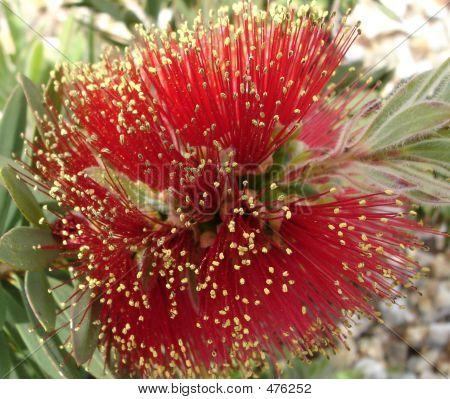 Allergy Red Alert - Pollen Bomb