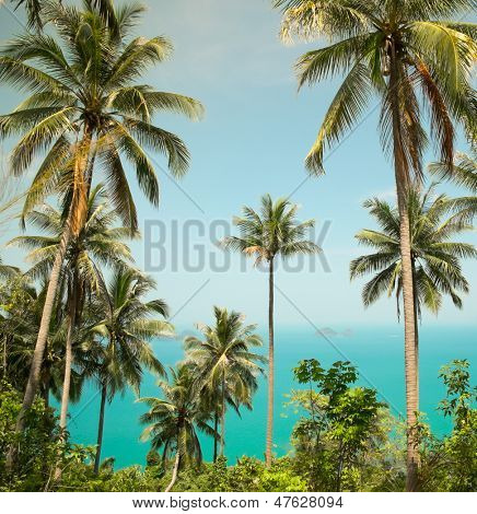 View of nice tropical background with coconut palms. Thailand