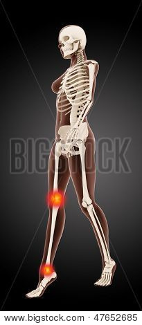3D render of a female medical skeleton walking with knee and ankle highlighted