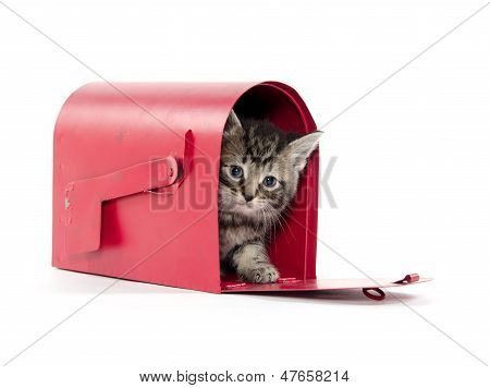 Cute Tabby Kitten In Mailbox