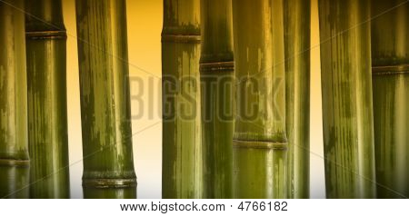 Wide Bamboo Background