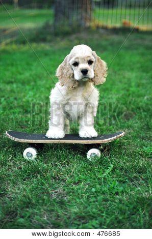 Acs Skateboarder Vert