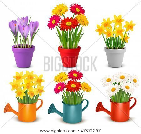 Collection of spring and summer colorful flowers in pots and watering can. Raster version of vector