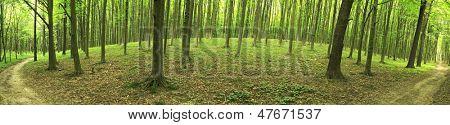 Panorama von einem grünen Sommer Wald