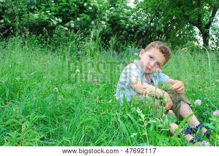 Little Boy Sits On A Lawn Of Clover.