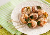 picture of escargot  - Snails escargot with butter and parsley on a table - JPG