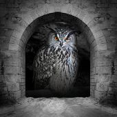pic of owl eyes  - The evil eyes in the vault window - JPG