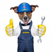stock photo of working animal  - craftsman dog with one thumb up holding a tool - JPG