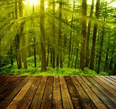 pic of himachal pradesh  - Wooden platform in pine tree forest - JPG