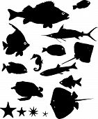 picture of guitarfish  - Many silhouettes of fish and other water animals - JPG