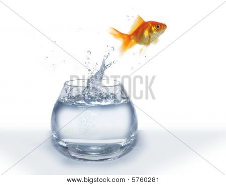 Jumping Out From  Aquarium Fish