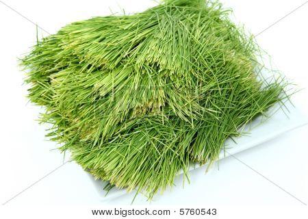 Placa de Wheatgrass