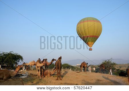 Hot air balloon flying over tribal nomad camel camp early in the morning,Pushkar,India